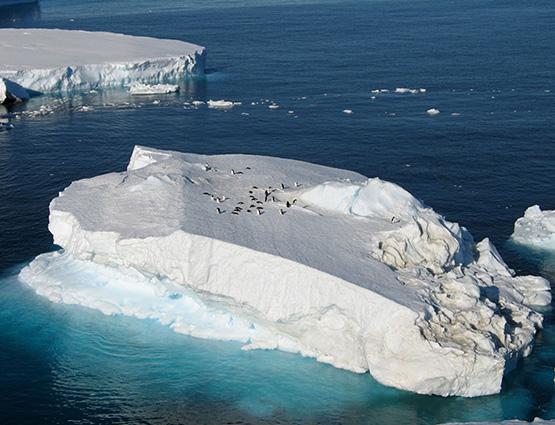 Vue aerienne d'un iceberg avec des manchots - Péninsule antarctique | Les Mondes Polaires