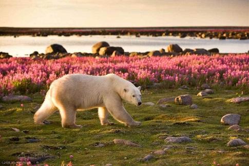 our polaire churchill - Canada arctique | Les Mondes Polaires
