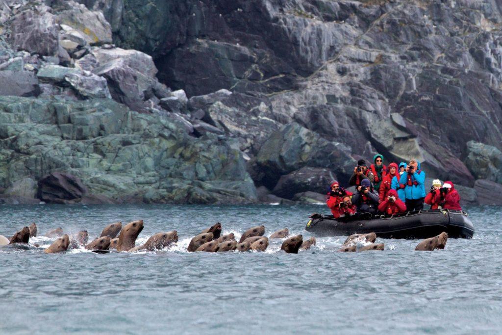 Approche des falaises des îles Kouriles pour observer les oiseaux et la faune marine - Extreme-orient russe | Les Mondes Polaires