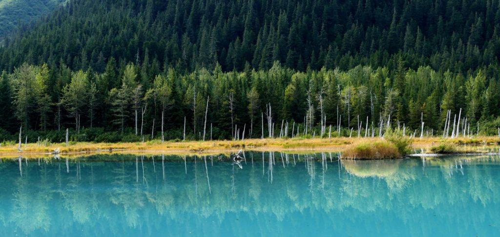 Lac turquoise et forêt de sapin - Canada | Les Mondes Polaires