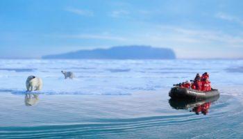 Une faune variée et en quantité dont l'ours polaire- terre Francois-Joseph | Les Mondes Polaires